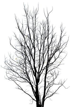 Photo pour Motif de l'arbre mort - image libre de droit