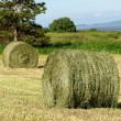 Two hay rolls in a mowed field. Trees, meadow and ...
