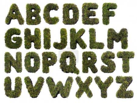Photo pour Lettres alphabet latin à base d'herbe sur blanc - image libre de droit
