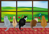 5 cats at the window