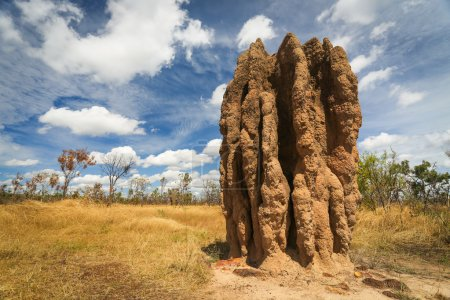 Termite mounds (Nasutitermes triodae), Kakadu National Park, Australia