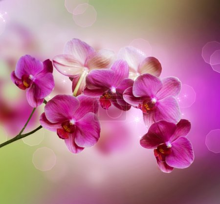 Photo for Orchid - Royalty Free Image