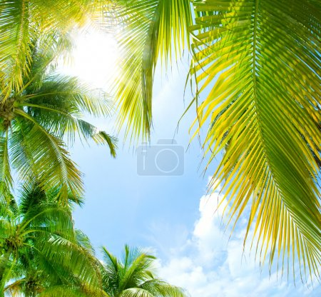 Photo pour Contexte tropical - image libre de droit