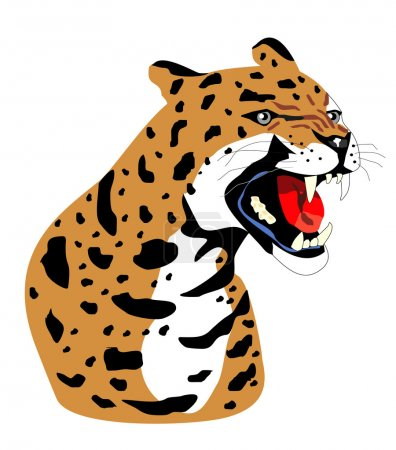 Vector isolated leopard