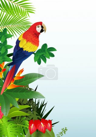 Macaw with tropical beach background