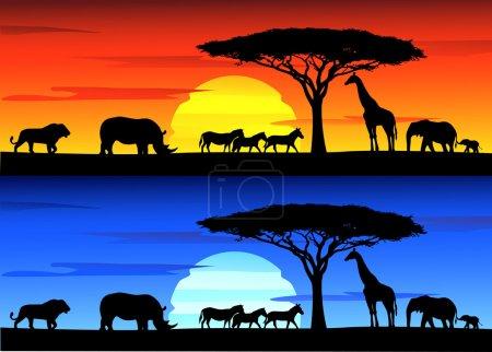 Beautiful sunset background on Africa wildlife