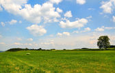 Meadow with white clouds on blue sky