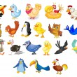 Collection of mixed cartoon birds on white...