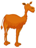 Illustration of a camel on white background