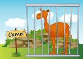 Illustration of a camel in cage and wooden board