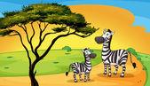 two zebra under tree