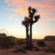 Panorama landscape of Joshua Tree National Park at...