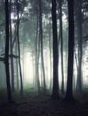 Vertical photo of a forest at morning