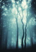 Vertical photo of trees in a forest with fog