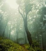 Forest vegetation around a huge old tree