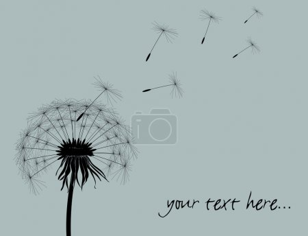 Dandelion background with space for your text