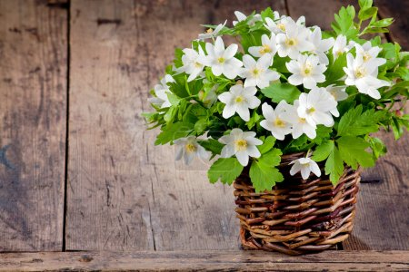 Photo for Bouquet of spring flowers - wood anemones on a rustic background - Royalty Free Image