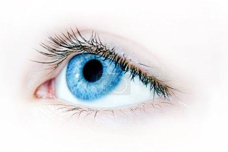 Photo pour Macro shot d'un bel oeil bleu - image libre de droit
