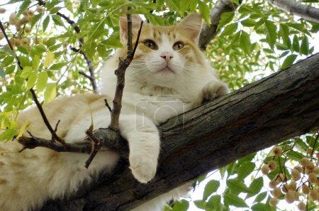 wildlife photos cats