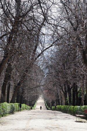 Photo pour Un homme marche seul sur un chemin dans un parc . - image libre de droit