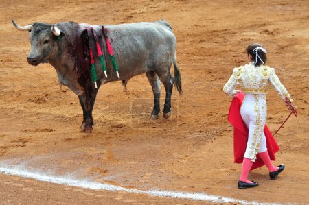 Mexican Bull-fight