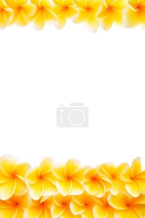 Photo pour Fleurs jaunes Frangipani disposées pour être bordure supérieure et inférieure. Il peut être retiré comme vous le souhaitez pour utiliser le bas ou le haut seulement . - image libre de droit