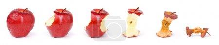 Photo pour Combinez six photos de la même pomme dans un état différent, pas de manipulation des couleurs et de saturation ajouté parce que cette photo prise en mesurant l'éclairage soigneusement et passé des jours à compléter en laissant tous mes équipements comme la première image prise - image libre de droit