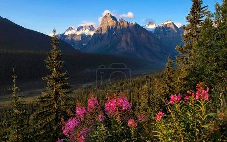 Photo pour Beau paysage naturel avec les montagnes Rocheuses dans le parc national Banff, Alberta, Canada . - image libre de droit