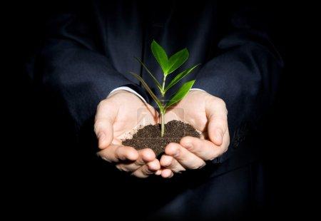 Photo pour Gros plan d'une branche fraîche avec des feuilles dans le sol tenu par un humain - image libre de droit