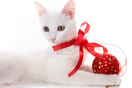 Photo pour Image de chat blanc avec ruban rouge et balle en studio sur fond blanc - image libre de droit