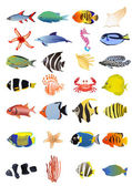 Collection of marine animals