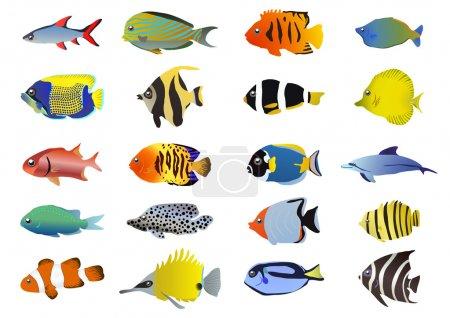 Illustration pour Ensemble de poissons tropicaux, illustration vectorielle - image libre de droit