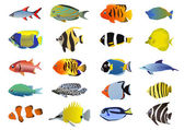 Set of tropical fishes