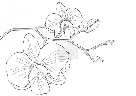 Illustration for Vector illustration of orchid flower on white background - Royalty Free Image