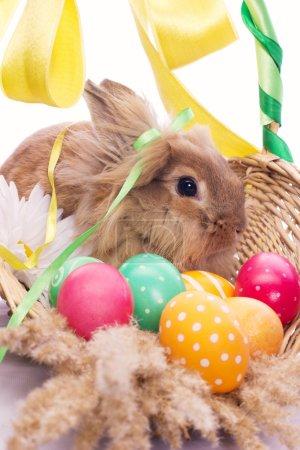 Photo pour Lapin drôle dans le panier avec oeufs de Pâques - image libre de droit