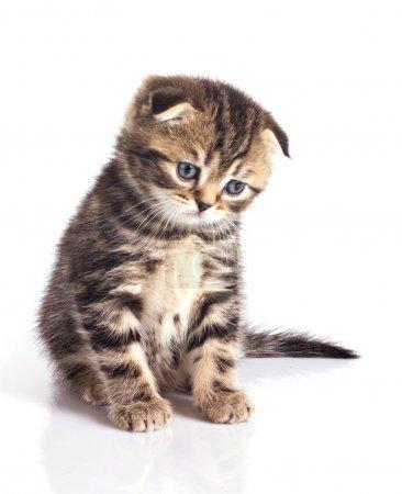 Sad little kitten