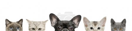 Photo for Cropped view of dog head and cat heads in front of white background, studio shot - Royalty Free Image