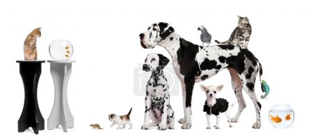 Photo for Group portrait of animals in front of black and white background - Royalty Free Image