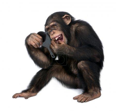 Photo pour Jeune chimpanzé en regardant ses dents dans un miroir devant un fond blanc - image libre de droit