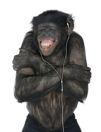 Photo for Monkey listening music with his white headset in front of a white background (Mixed-Breed between Chimpanzee and Bonobo (20 years old)) - Royalty Free Image