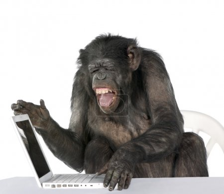 Photo for Portrait of Chimpanzee playing with a laptop against white background, studio shot - Royalty Free Image
