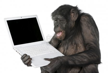 Photo pour Monkey looking at an empty computer screen (Mixed-Breed between Chimpanzee and Bonobo) (20 years old) in front of a white background - image libre de droit