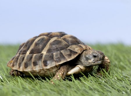 Turtle on grass against a blue sky