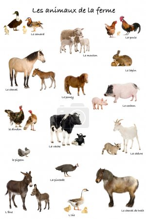 Collage of farm animals in French in front of white background,