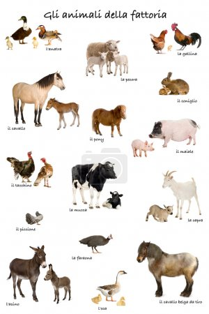 Collage of farm animals in Italian in front of white background,