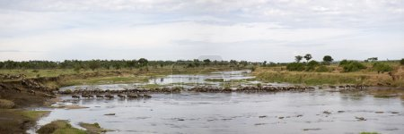 El ñus en el río en el Serengeti, Tanzania, África