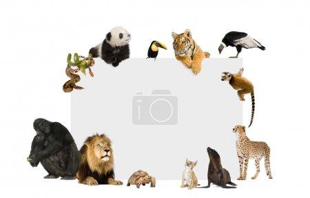 Group of wild animals around a blank poster