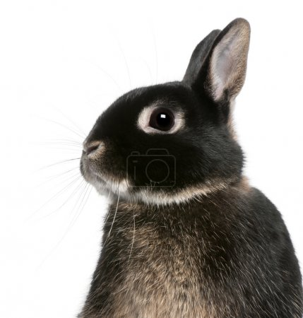 Close-up of rabbit in front of white background