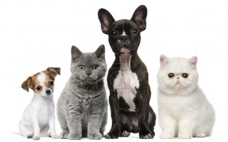 Photo for Group of dogs and cats in front of white background - Royalty Free Image