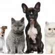 Group of dogs and cats in front of white backgroun...